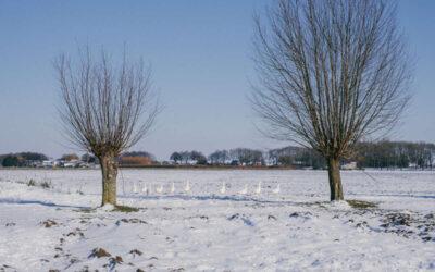 Biodiversiteit in de sneeuw
