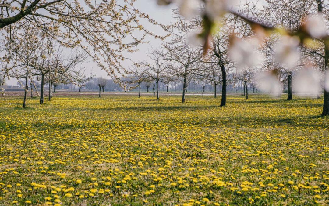 Gele voorjaarsdeken